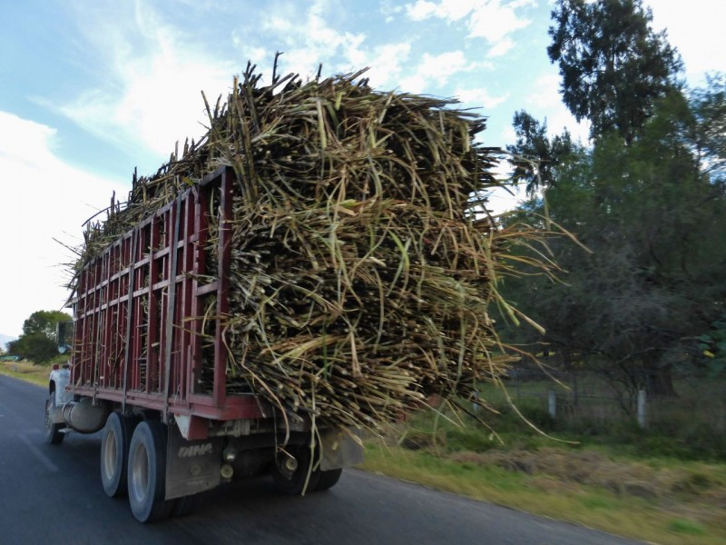 Trucks carry the harvest…