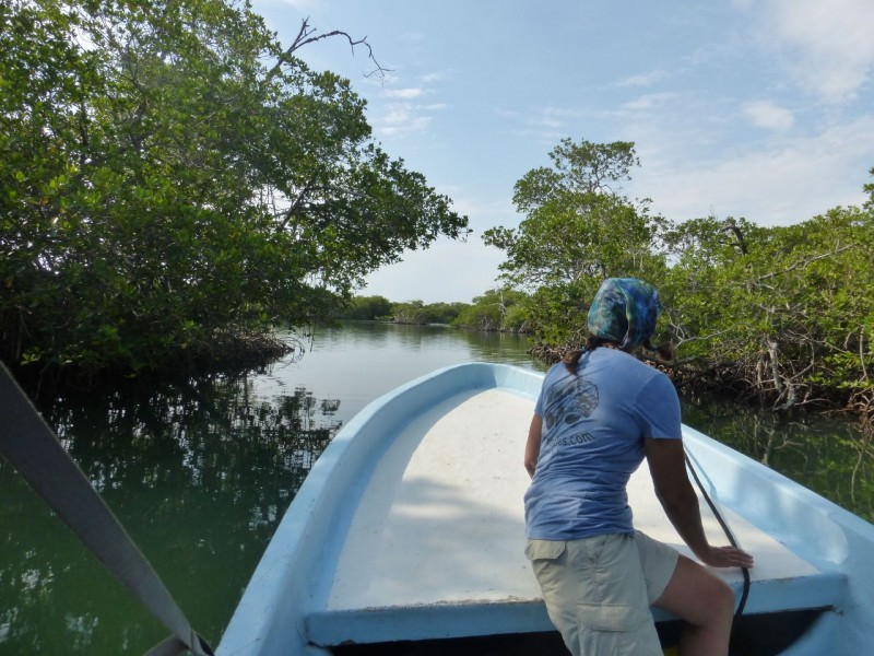 Cruising through the mangrove swamps toward Monkey River Town.