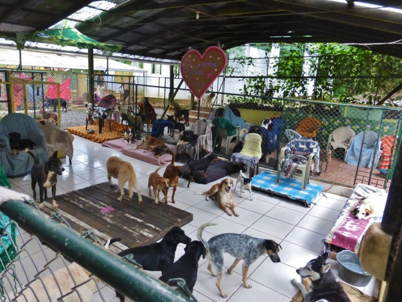 "Then we checked out the ""Pet Motel"" where 142 rescue dogs live, hanging out on old couches and chairs and making more racket the anything we heard later in the jungle."