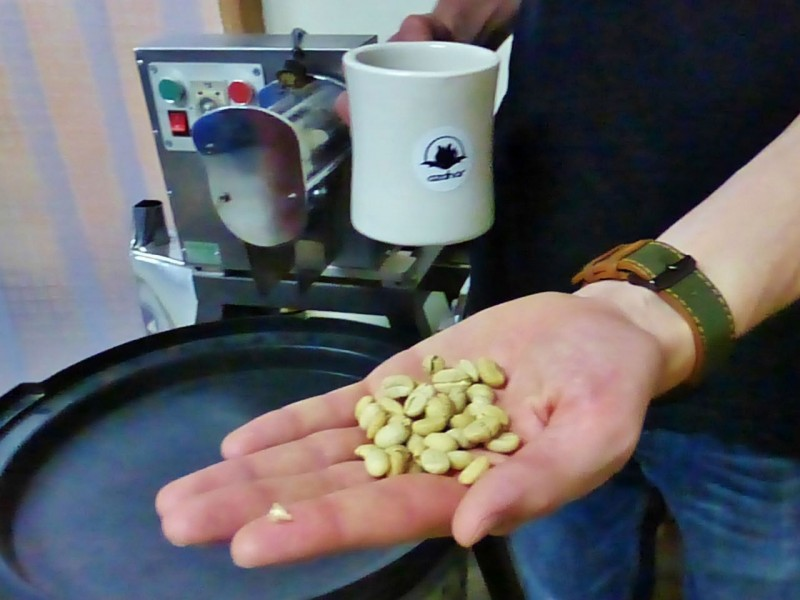 Raw coffee beans that have been shelled and washed and are now ready for roasting.