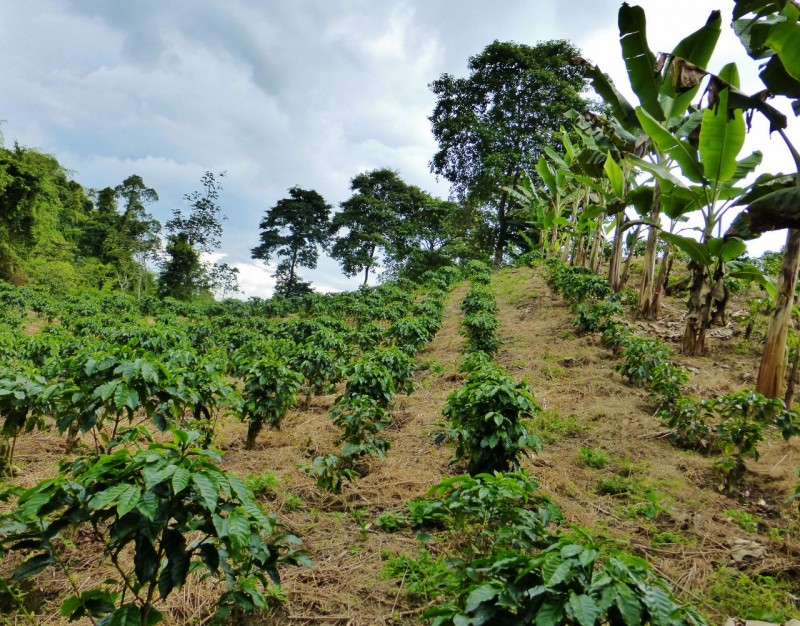 We toured a coffee plantation belonging to a good friend of Tyler's and learned more about the complex process that goes into making your morning wakeup juice.