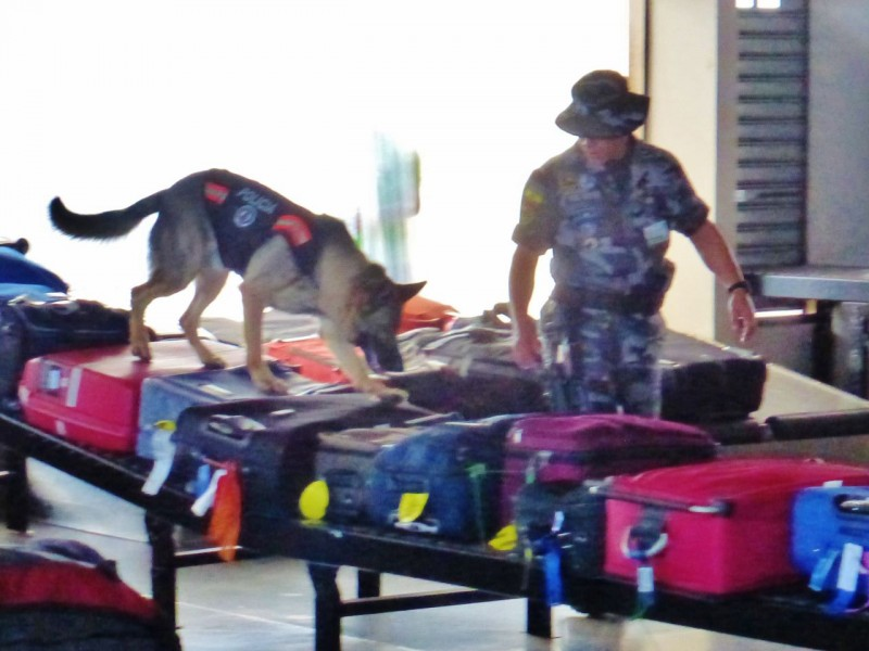 The first animal we saw was this food sniffing dog, padding eagerly all over our bags looking for illegally imported snacks.  Part of the way the Islands are protected is by strict controls of any biological materials.