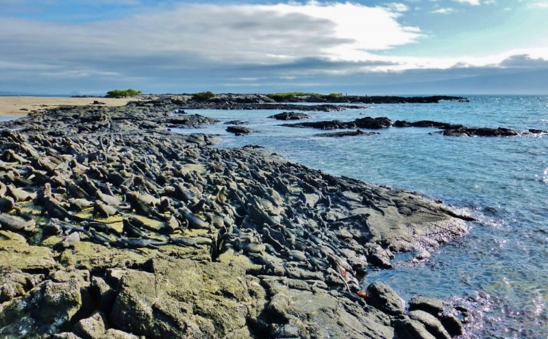 Look closely…those aren't rocks, they are heaps of marine iguanas warming in the bright equatorial sun.