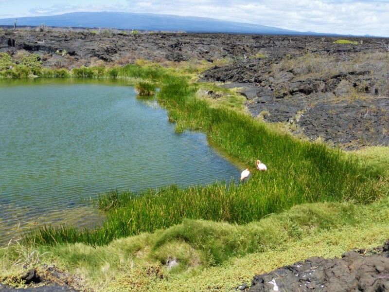This flamingo feeding ground was a tidal marsh tucked away deep in the lava fields.