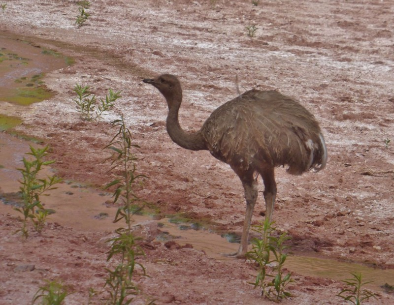 Okay, not going to see ostriches in Moab!