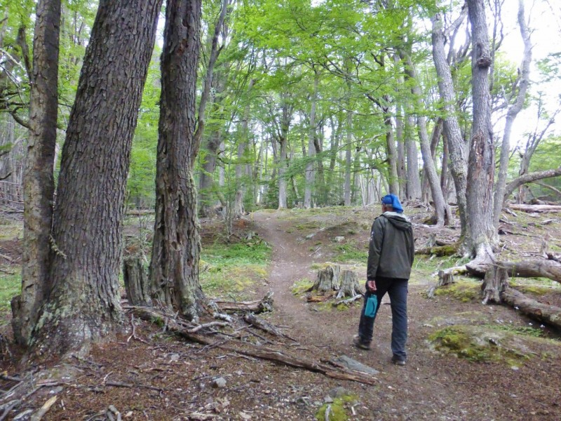 The next day we did a wonderful 5 mile hike to a lookout over the Beagle Channel which lies south of the island of Tierra del Fuego.   The forest had a mysterious, quiet feel, aided by the fact that we saw no one else the whole hike.