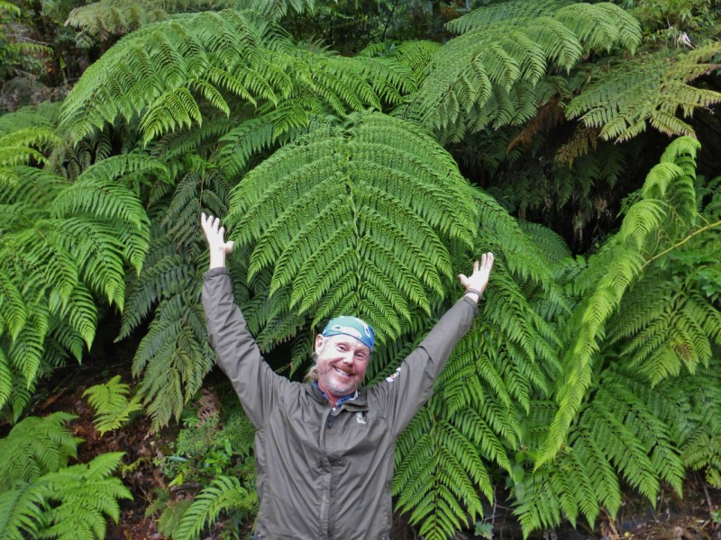 …and giant ferns! (They are ferns, aren't they?)