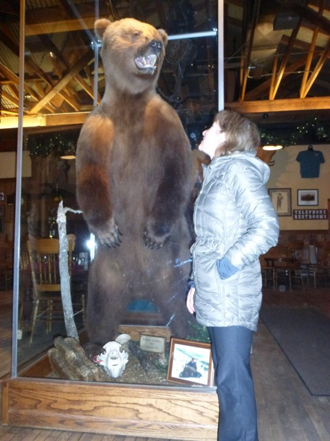 The closest we want to get to a grizzly.