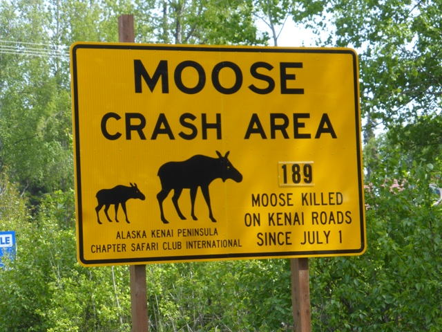 Sadly, these have been pretty common on the roads in southern Alaska.