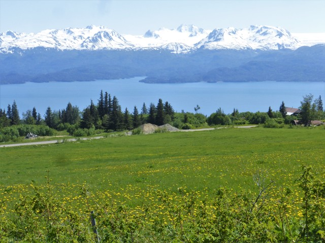The countryside around Homer is gorgeous. We spent a day wandering around and eventually drove to the very end of East End Road which winds through lovely, green hills, overlooks the turquoise bay and is surrounded by ice capped mountains.
